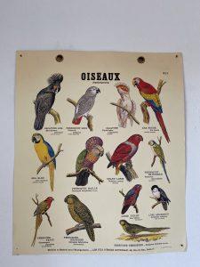 Affiches sur les races perroquets